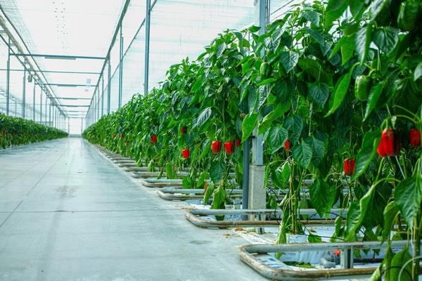 EIS Case Study: Agri Tech, a transformative farming innovation